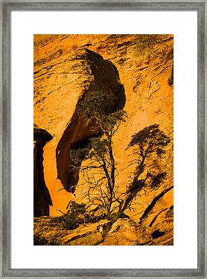 Lone Tree At Landscape Arch Framed Print