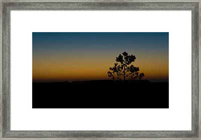 Lone Tree At Sunset Framed Print by Marco Oliveira