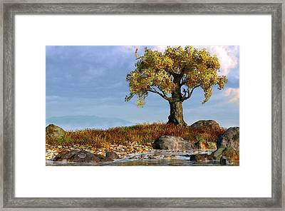 Lone Tree By A Stream Framed Print by Daniel Eskridge