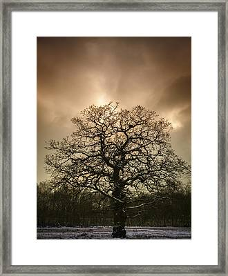 Lone Tree Framed Print by Amanda Elwell