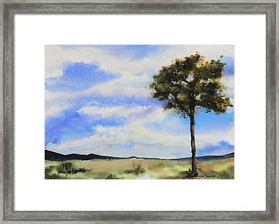 Lone Tree Colorado Framed Print