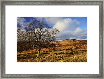 Lone Tree  Framed Print by Darren Galpin