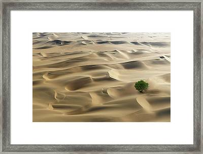 Lone Tree In A Desert Framed Print by Buena Vista Images