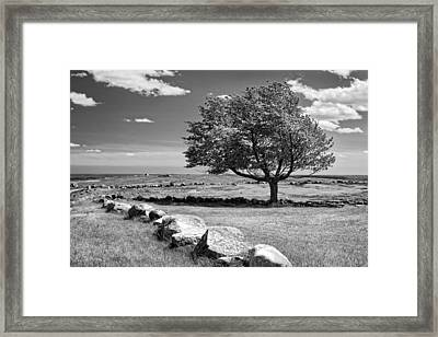 Lone Tree In Maine Blueberry Field Framed Print by Keith Webber Jr