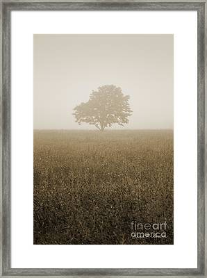 Lone Tree In Meadow Framed Print by David Gordon