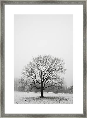Framed Print featuring the photograph Lone Tree In Snow by Ed Cilley