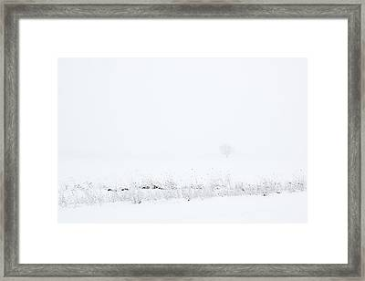 Lone Tree In Snow Framed Print by Mary Bedy