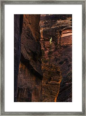 Lone Tree In The Canyon Framed Print by Andrew Soundarajan
