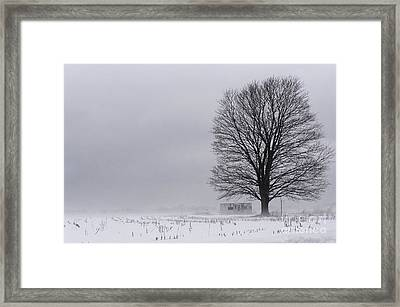 Lone Tree In The Fog Framed Print by Debra Fedchin