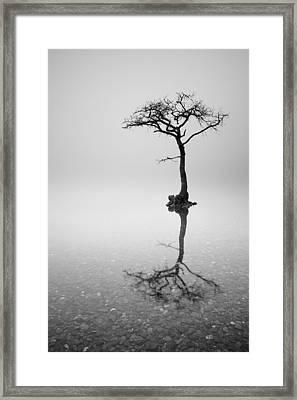 Lone Tree In The Mist Framed Print by Grant Glendinning