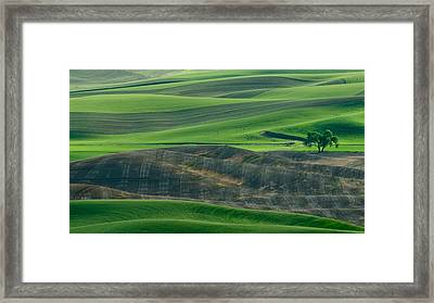 Lone Tree In The Palouse Framed Print by Don Schwartz