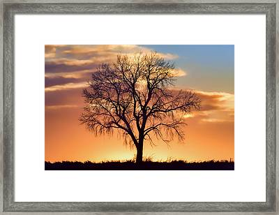 Lone Tree In Winter - Sunset - Centered Framed Print by Nikolyn McDonald