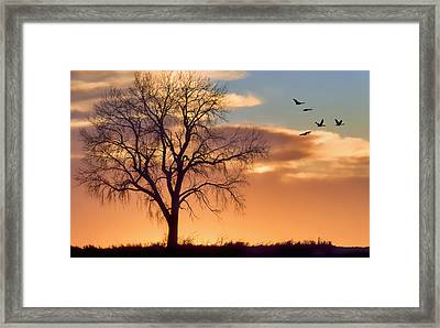 Lone Tree In Winter - Sunset - Geese Framed Print by Nikolyn McDonald