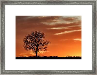 Lone Tree In Winter - Sunset - Silhouette Framed Print by Nikolyn McDonald