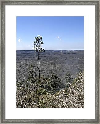 Lone Tree Kilauea Crater Framed Print