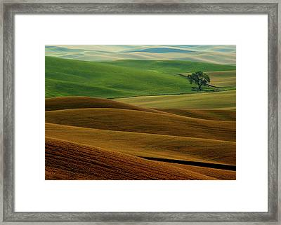 Lone Tree Framed Print by Latah Trail Foundation