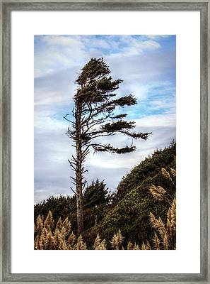 Lone Tree Framed Print by Melanie Lankford Photography