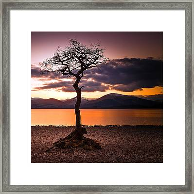 Lone Tree Of Loch Lomond Framed Print