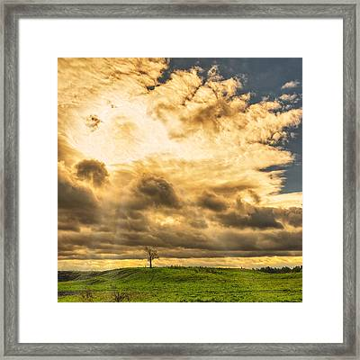 Lone Tree On A Knoll Framed Print