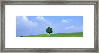 Lone Tree On Hilltop Salzkammergut Framed Print by Panoramic Images