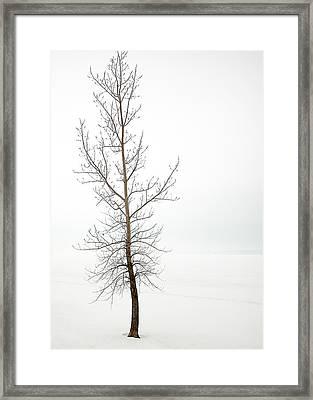 Lone Tree On The Ottawa River Shoreline Framed Print