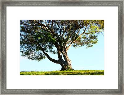 The Lone Tree Original Framed Print by Marty Gayler