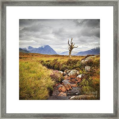 Lone Tree Rannoch Moor Scotland Framed Print by Colin and Linda McKie