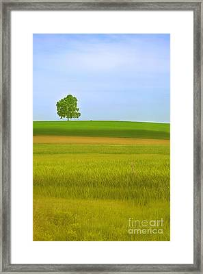 Lone Tree Framed Print by Rima Biswas
