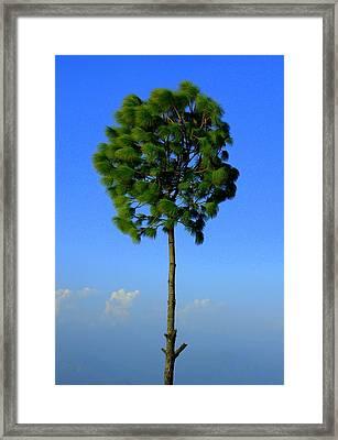 Lone Tree Framed Print by Salman Ravish