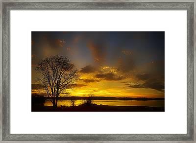 Lone Tree Sunrise Framed Print by Dan Holland