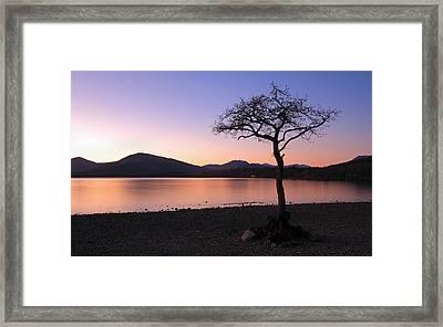 Lone Tree Sunset Framed Print by Grant Glendinning