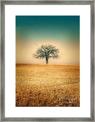 Lone Tree With Birds Framed Print