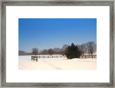 Lone Winter Evergreen  Framed Print