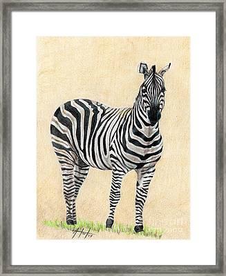 Lone Zebra Framed Print by Audrey Van Tassell