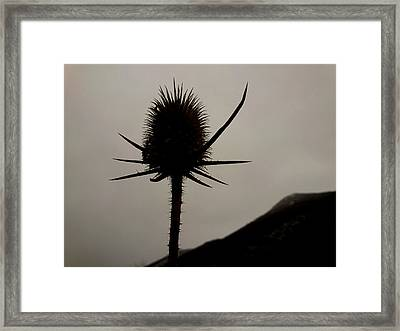 Framed Print featuring the photograph Loneliness by Lucy D