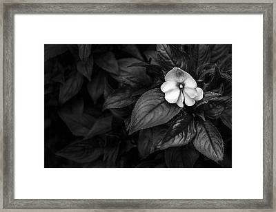 Lonely 1 Framed Print by Jon Glaser