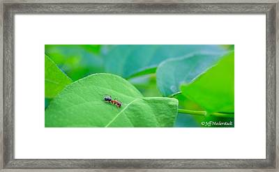 Lonely Ant Framed Print