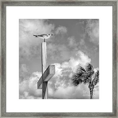 Lonely At The Top Framed Print by Lynn Palmer
