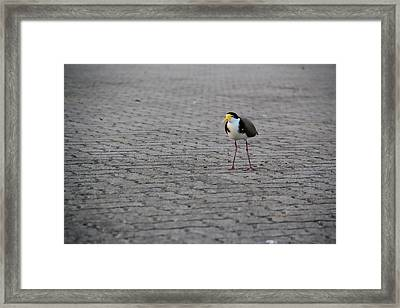 Lonely Bird Framed Print by A K Dayton