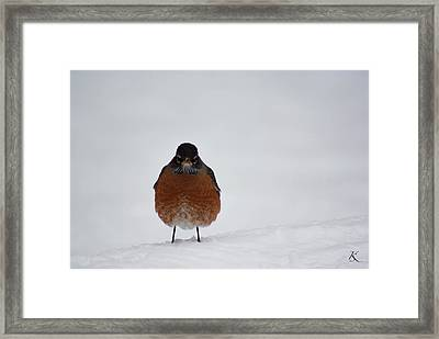 Lonely Bird Framed Print