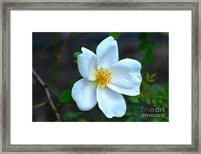 Lonely Blossom... Framed Print