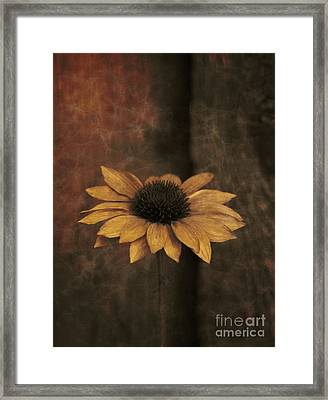 Framed Print featuring the photograph Lonely Coneflower by Marjorie Imbeau