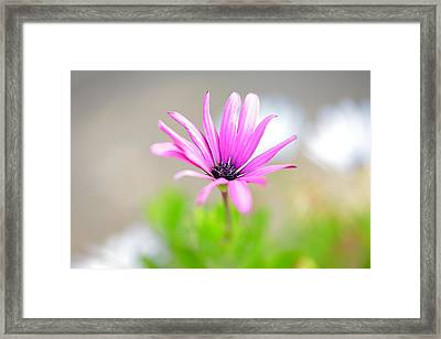 Lonely Cosmos Framed Print