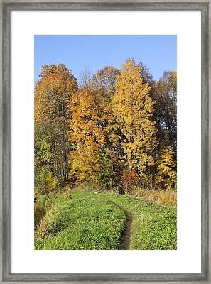 Lonely Dog In Autumn Framed Print by Aleksandr Volkov