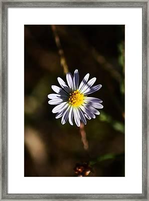 Lonely Flower Framed Print by Phillip Segura