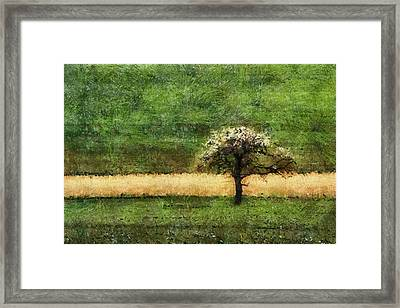 Lonely Framed Print by Georgi Dimitrov