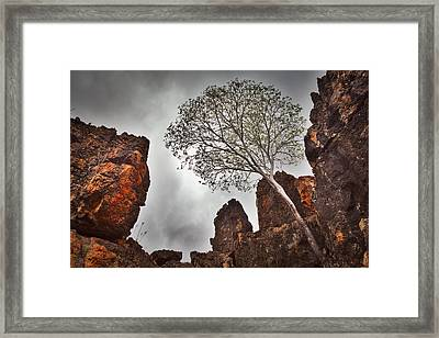 Lonely Gum Tree Framed Print