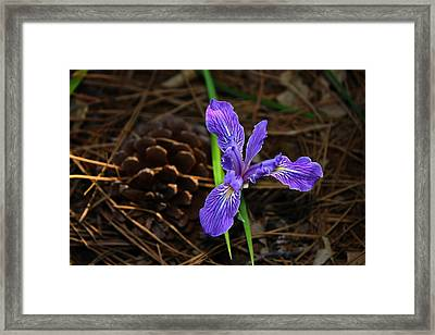 Framed Print featuring the photograph Lonely Iris by Richard Stephen