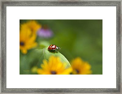 Framed Print featuring the photograph Lonely Ladybug by Christina Rollo