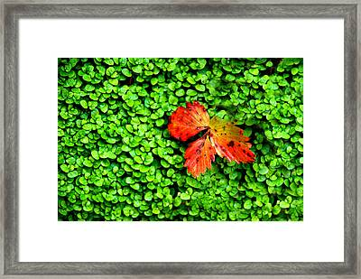 Framed Print featuring the photograph Lonely Leaf by Charlie and Norma Brock